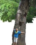 Un muchacho embrancing un árbol Imagenes de archivo