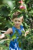 Un muchacho en un árbol escoge manzanas imagen de archivo libre de regalías