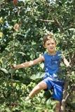 Un muchacho en un árbol escoge manzanas fotos de archivo libres de regalías