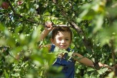 Un muchacho en un árbol escoge manzanas foto de archivo libre de regalías