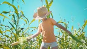 Un muchacho en un sombrero de paja está jugando en un campo de maíz, el niño está sosteniendo mazorcas de maíz y se presenta como almacen de metraje de vídeo