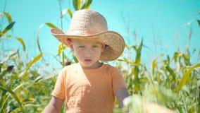Un muchacho en un sombrero de paja está jugando en un campo de maíz, el niño está sosteniendo mazorcas de maíz y se presenta como almacen de video
