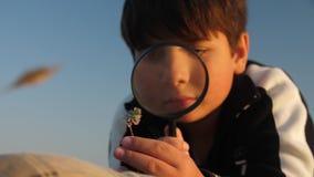 Un muchacho examina una planta a través de una lupa en naturaleza almacen de metraje de vídeo