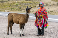 Un muchacho peruano que sostiene una llama en la región de Puno de Perú Fotos de archivo libres de regalías