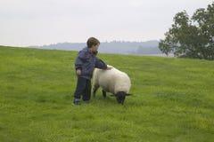 Un muchacho que frota ligeramente una oveja fotos de archivo