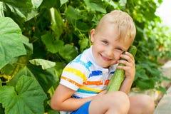 Un muchacho rubio alegre, bronceado recolecta los pepinos verdes en un gre Fotografía de archivo libre de regalías