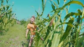 Un muchacho rubio en una camiseta anaranjada está jugando en un campo de maíz, un niño está ocultando adentro detrás de tallos de almacen de video