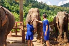 Un muchacho y una muchacha acarician un elefante en el santuario en Chiang Mai T fotos de archivo
