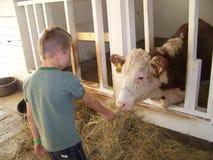 Un muchacho y una vaca Foto de archivo libre de regalías