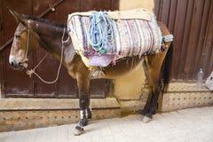 Un mulo divertente sta portando una certa roba in un bazar di Fes Fotografia Stock