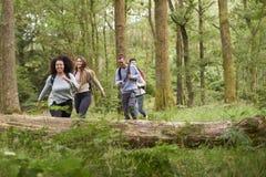 Un multi gruppo etnico di cinque giovani amici adulti che camminano in una foresta durante l'aumento immagini stock