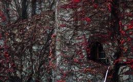 Un mur dans un conte de fées image stock