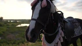 Un museau d'une fin fleurie de cheval au coucher du soleil dans le mouvement lent clips vidéos