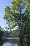 Árbol de Cypress en el funcionamiento de las primaveras de la sal Fotografía de archivo