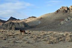 Un mustang selvaggio solo nelle colline dipinte fotografia stock