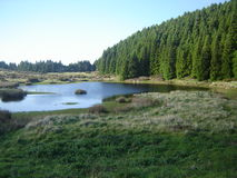 ¡Un Natureza ningún puro de los mais del estado del seu! Fotografía de archivo libre de regalías