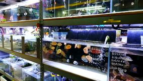 Un negozio dell'acquario in Hong Kong archivi video