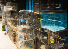 Un negozio di animali che vende vario genere di uccelli in gabbia Depok contenuto foto Indonesia Immagine Stock Libera da Diritti