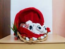 Un neonato anziano da cinque giorni che dorme nel canestro Fotografia Stock