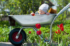 Un niño en una carretilla Fotografía de archivo