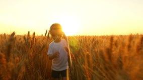 Un niño feliz corre a través de un campo del trigo maduro contra la puesta del sol almacen de metraje de vídeo
