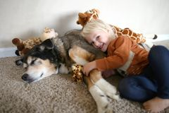 Un niño joven está sonriendo feliz mientras que ella abraza su pastor alemán Dog del animal doméstico y sus jirafas del juguete fotografía de archivo libre de regalías