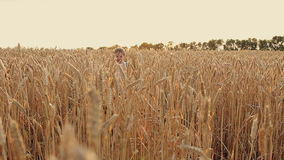 Un niño pequeño corre para reírse del campo de trigo en la puesta del sol metrajes
