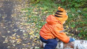 Un niño que balancea en un árbol caido en el parque almacen de metraje de vídeo