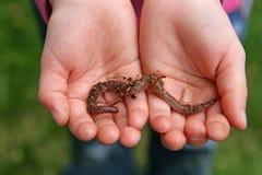 Un niño y un gusano Foto de archivo libre de regalías