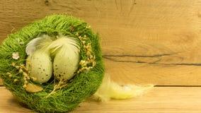 Un nid avec des oeufs de pâques en vert Photographie stock libre de droits