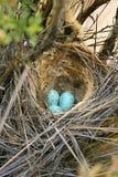 Un nido colourful degli uccelli Fotografia Stock