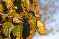 Un nido creato dalle vespe in un albero fotografie stock