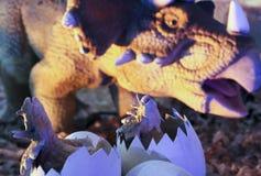 Un nido del triceratopo con una coppia i Hatchlings Immagini Stock Libere da Diritti