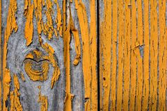 Un nodo in un albero con i resti di pittura gialla Fotografia Stock Libera da Diritti