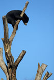 Un noir concernent le dessus d'un arbre Photographie stock