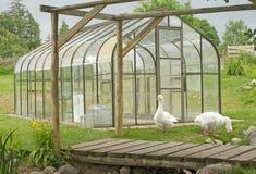 Un nuevo invernadero en una granja. Imagen de archivo