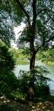 Un'oasi nella città Fotografie Stock Libere da Diritti
