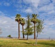Un oasis de varios árboles estira alto entre el top de la montaña imagen de archivo libre de regalías