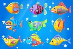 Un océan avec neuf poissons colorés Photographie stock libre de droits