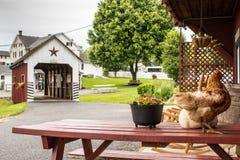 Un'occhiata dello stile di vita tradizionale nel villaggio di Amish, Pensilvania immagine stock
