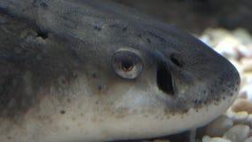 Un occhio del pesce stock footage