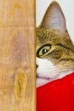 Un occhio di un gatto Immagini Stock Libere da Diritti