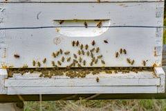 Un occupé d'une ruche d'abeille photographie stock