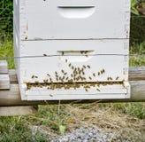 Un occupé d'une ruche d'abeille photographie stock libre de droits