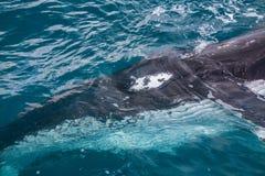 Un oeil du ` s de baleine Photos stock