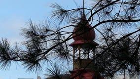 Un oignon regardant le sort malheureux sur un toit d'un bâtiment par une branche de sapin banque de vidéos