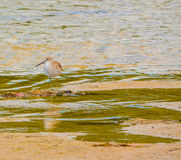 Un oiseau à la réservation aquatique de baie de citron en Cedar Point Environmental Park, le comté de Sarasota la Floride image stock