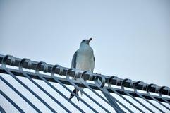 Un oiseau Images stock