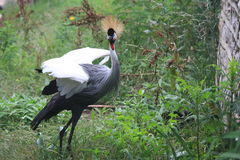 Un oiseau alarmé Images stock