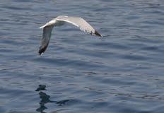 Un oiseau au-dessus de la mer Photos stock